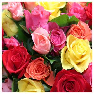 Signification De La Couleur Des Roses Fete